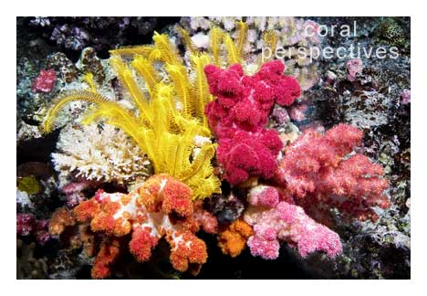 Crinoid and Soft Coral Bouquet